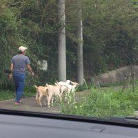 沖縄ならではの風景