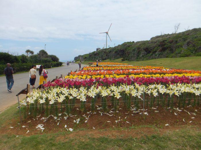 伊江島ゆり祭り2